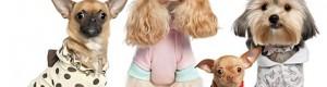 Какие есть аксессуары для собак
