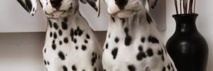 Далматин — Dalmatians