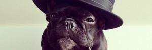Французский бульдог — French Bulldog
