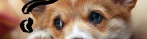 Пять показателей цены на щенков