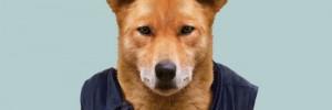 Динго — дикие псы