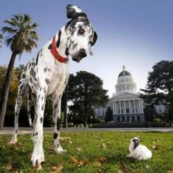 Этапы взросления собаки