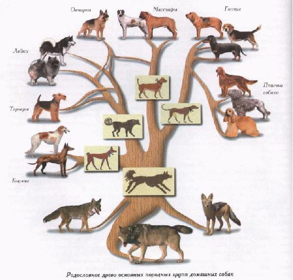Краткая история собак