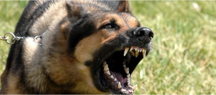 Агрессия у собаки