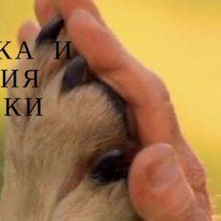 Дрессировка и поощрения для собаки