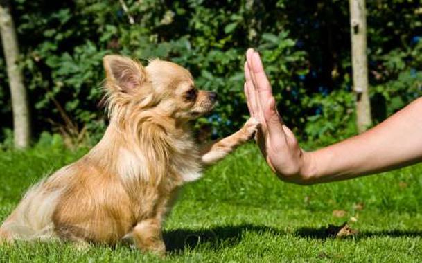 собака дает пять