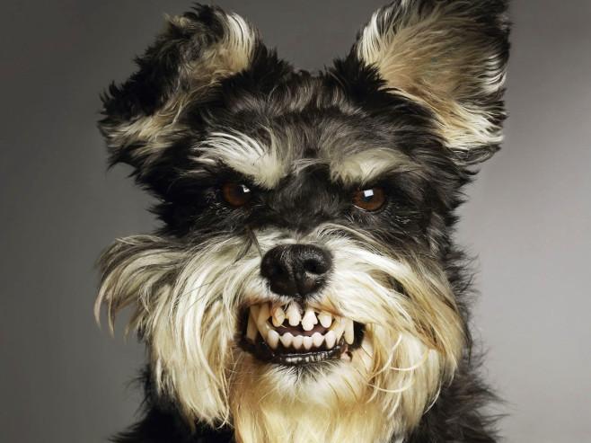 Агрессия у собак