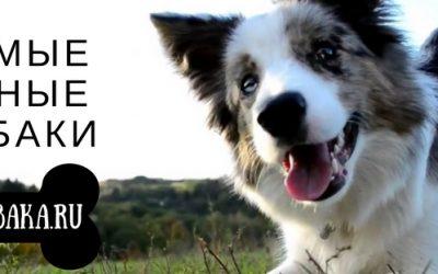 Самые умные собаки мира