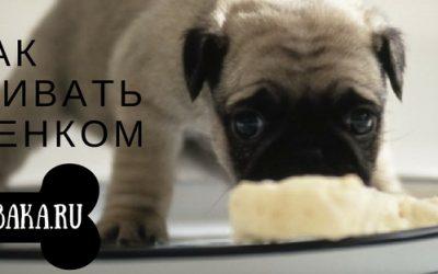 Как ухаживать за маленьким щенком