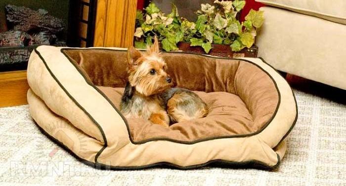 подготовка дома к появлению щенка