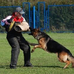 """Как научить собаку команде """"фас""""?"""