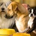 Основы питания собак
