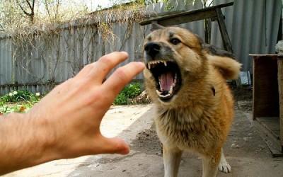 Что делать если укусила собака
