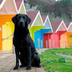 Различает ли собака цвета?
