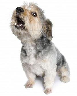 Почему собака лает