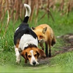 """Учим собаку команде """"Ищи!"""""""