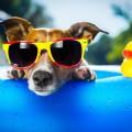 Нужные ли собаке солнечные очки?