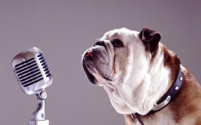 Команда голос у собаки