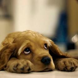 Почему собака скулит