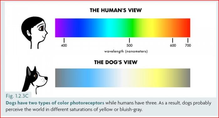 Цвет различают собаки