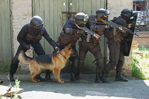 Немецкая овчарка порода собак