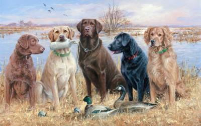 Особенности содержания охотничьих собак