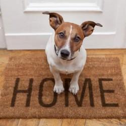 появление щенка в доме