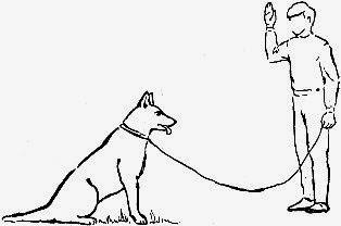 """команда собаке """"Стоять"""""""