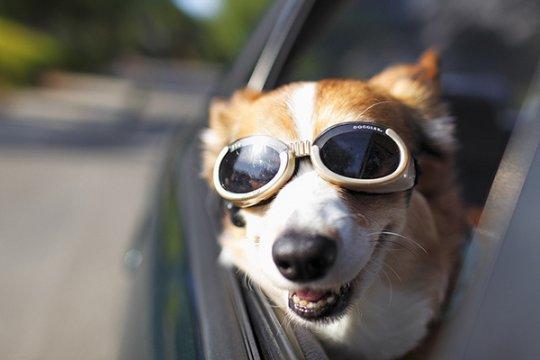 Берем собаку в поездку