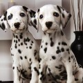 Далматин порода собак