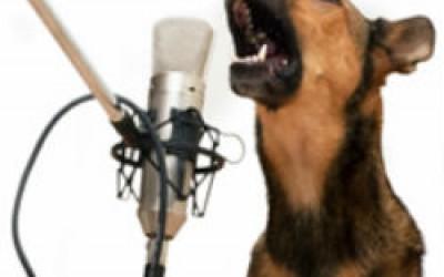 Как отучить собаку лаять в доме?