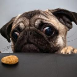 Как отучить собаку подбирать еду с земли на улице?