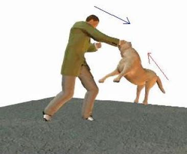 Защита от собаки