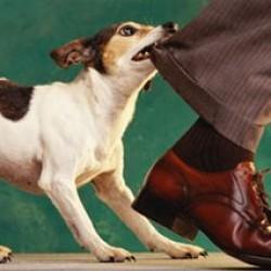 Собака кусает за ноги