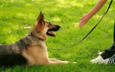 Как обучить собаку команде «Лежать!»?