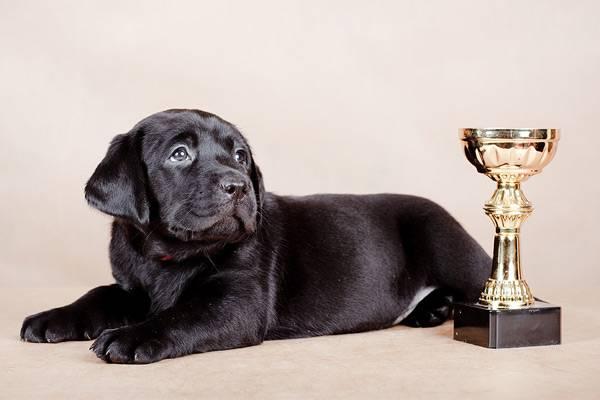 разведение и продажа собак