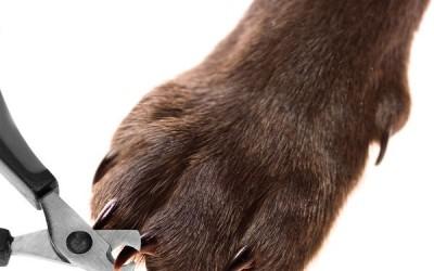 Стрижка ногтей собаке