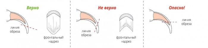 стрижка ногтей собаки