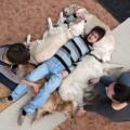 Канистерапия лечение собаками