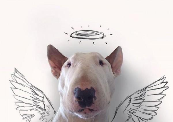 Бультерьер порода собак