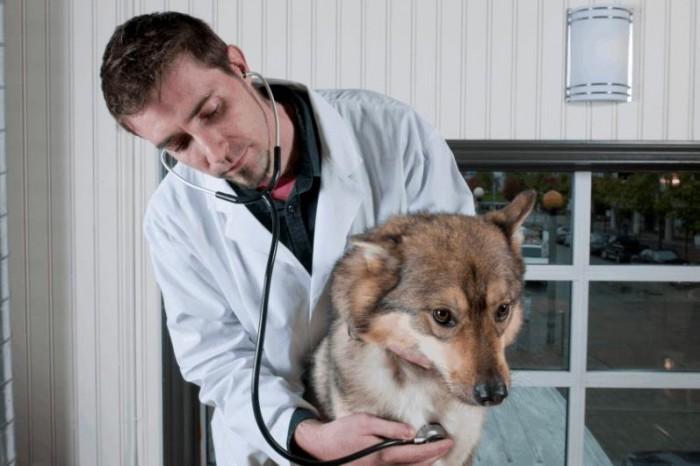 аритмия у собак