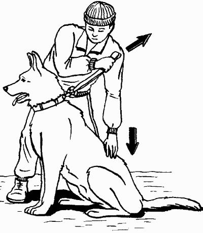 """Обучаем собаку команде """"Сидеть!"""""""