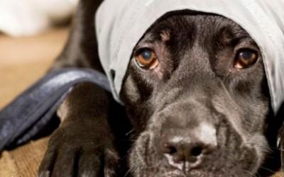 Отит у собаки лечение и причины