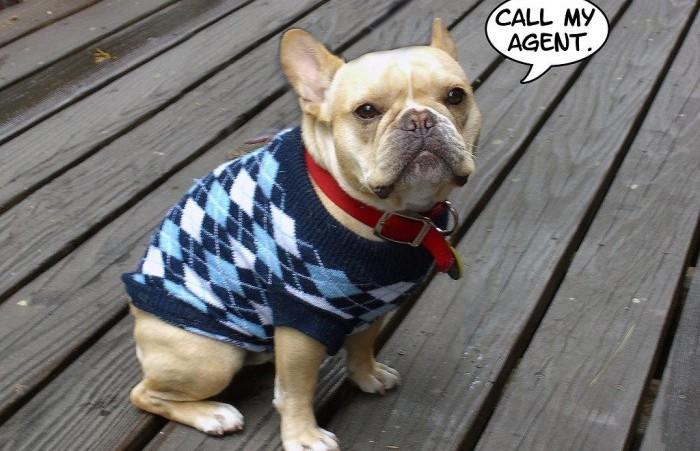 Французский бульдог порода собак