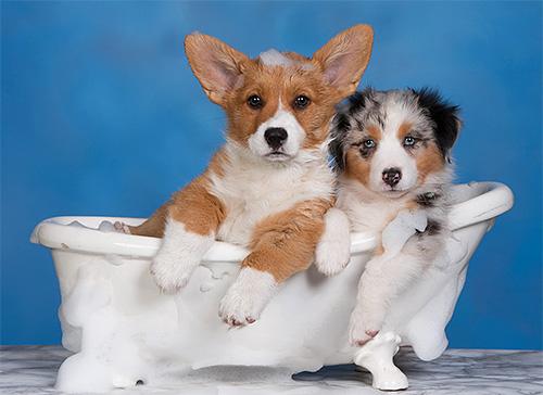 Купание собаки