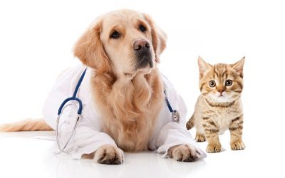 Абсцесс у собаки