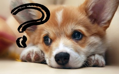 От чего зависит цена на щенка
