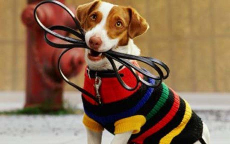 Как сделать прогулку с собакой интересной