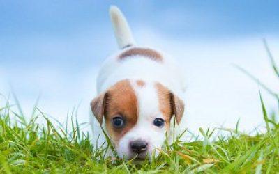поисковые собаки