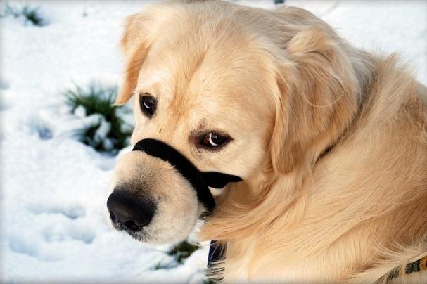 Бронхит у собаки